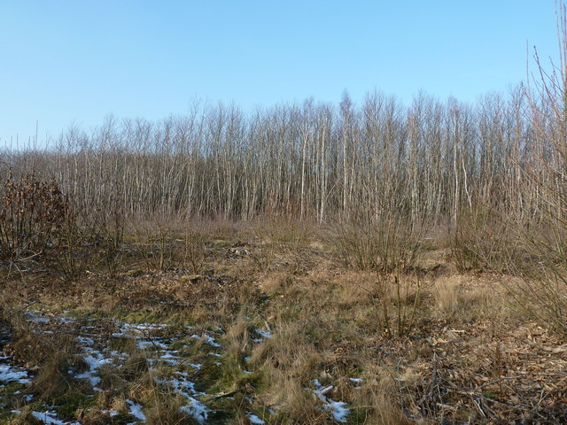 Spithandle Copse north of Spithandle Lane