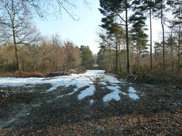 Woodland management in South Copse