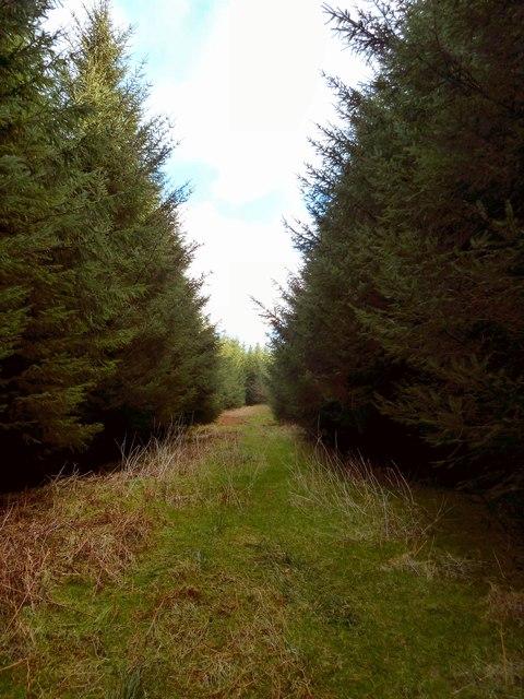 Track through Merton Hall Moss