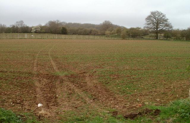 Vehicle tracks across a field near Crick