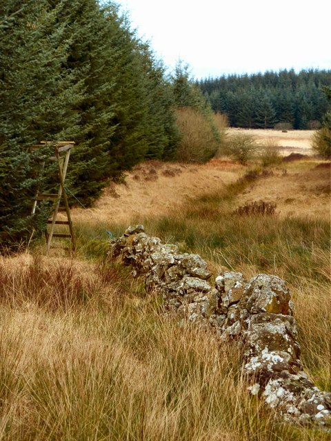 Stane Wall and Fire Break