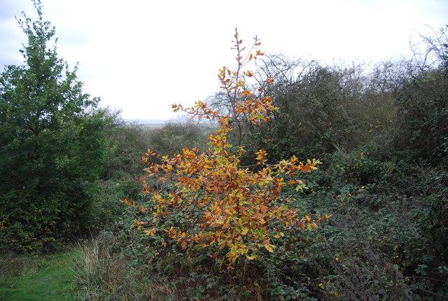 Autumnal colour, Northward Hill Reserve