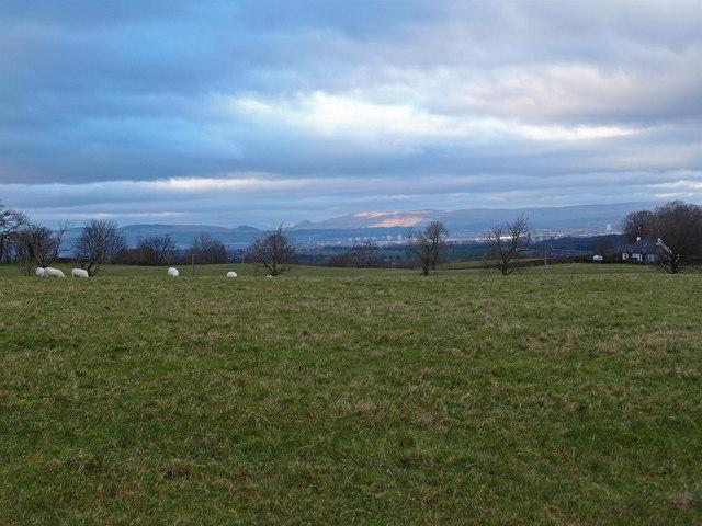 Sheep Grazing near Neilston
