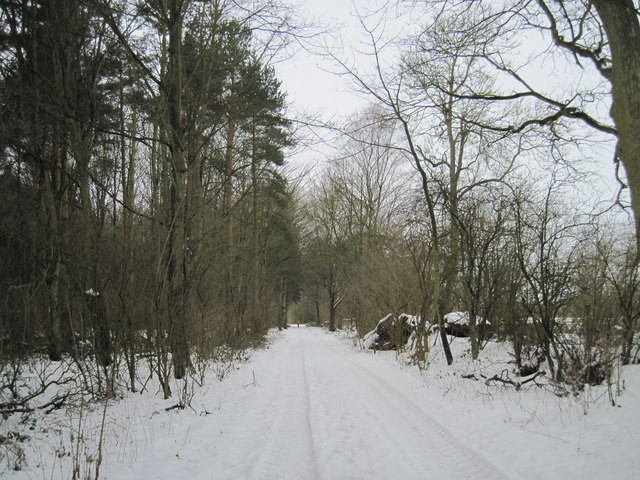 Track  through  the  Wood