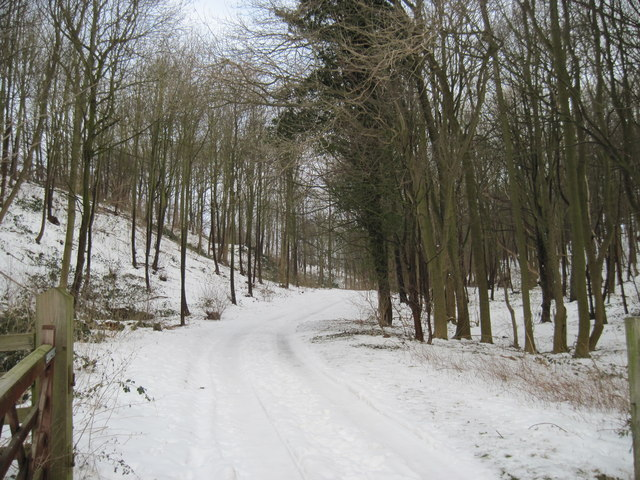 Woodland  Track  to  Easthorpe
