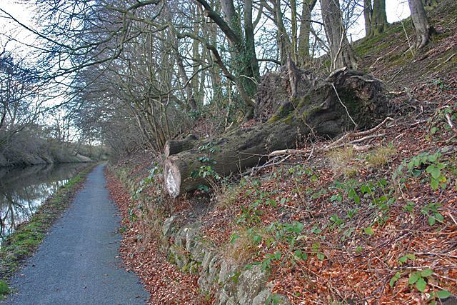 Fallen Tree by the Towpath