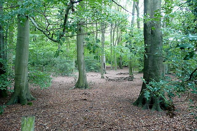 Corker's Wood