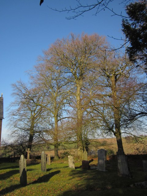 Trees in the churchyard, Virginstow