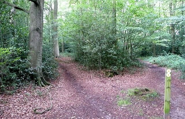 Junction in Saunder's Wood