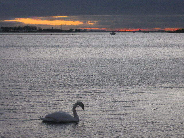 Emsworth, swan