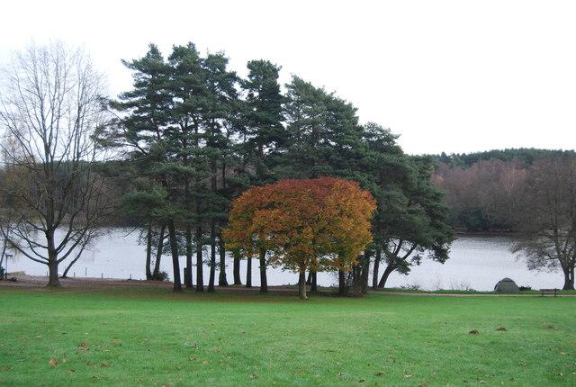 Trees on the shore of Tilgate Lake
