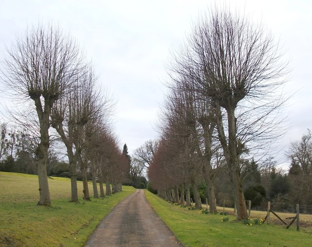 Avenue at the eastern approach to Fredley Manor