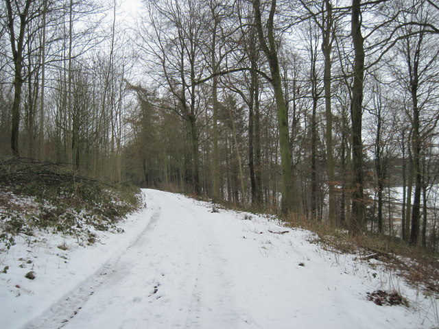 Track  through  Huttons  Bank  Wood