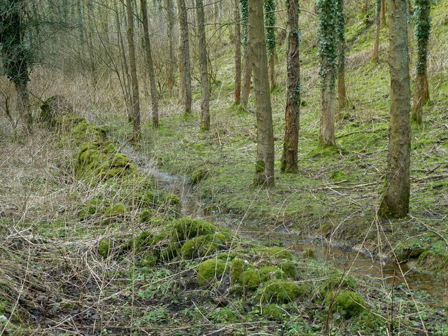 Valley woodland and stream in Coombs Dale