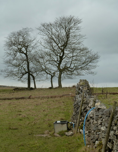 Wall and trees on Middleton Moor