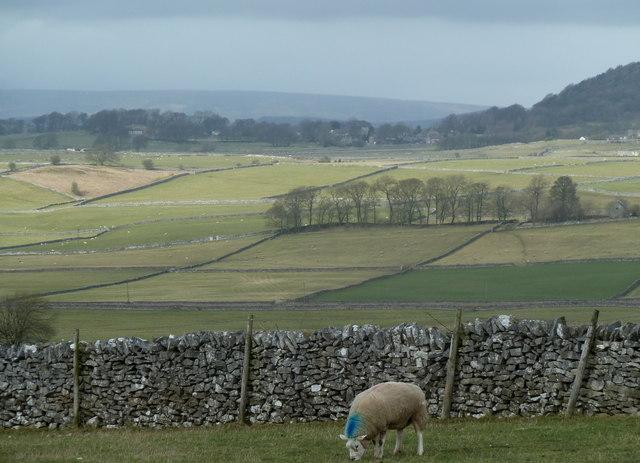 Upland grazing countryside