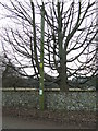 TL7169 : Telegraph Pole And Tree by Keith Evans