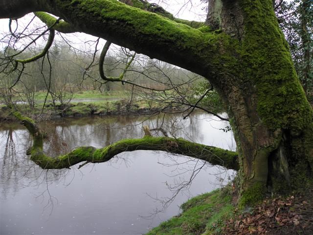 A mossy bough, Riverview
