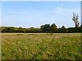 SP6504 : Pasture, Tiddington by Andrew Smith
