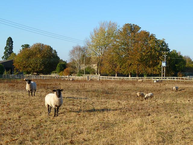 Pasture, Waterstock