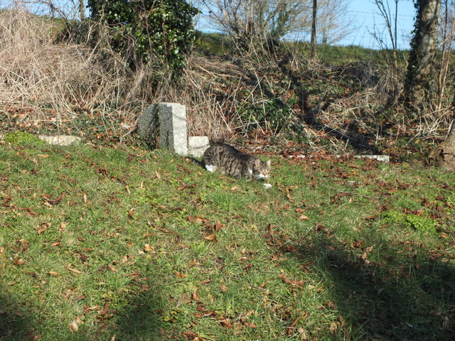 The churchyard cat
