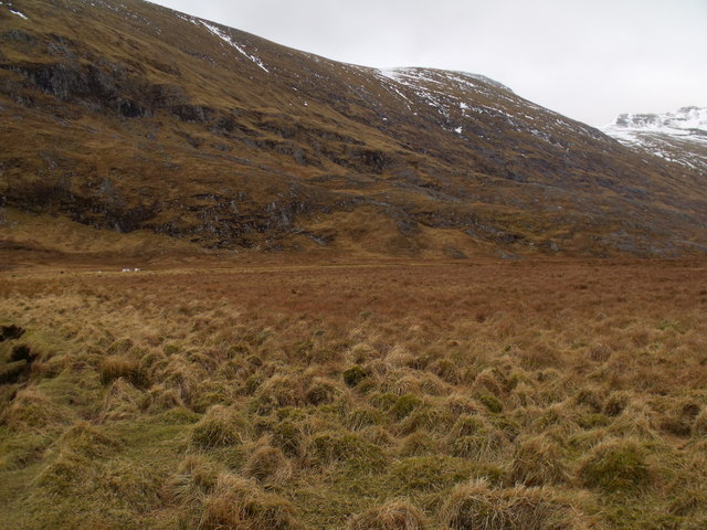 Upland fertility on alluvial flat by Allt Coire an Eoin in Killiechonate Forest