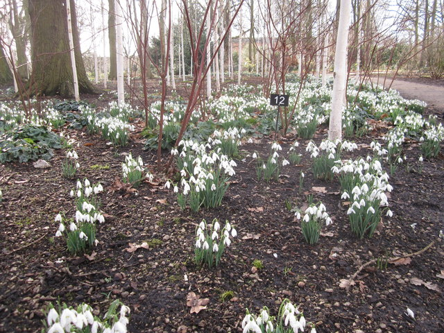 Snowdrop time in the Winter Garden Dunham Massey