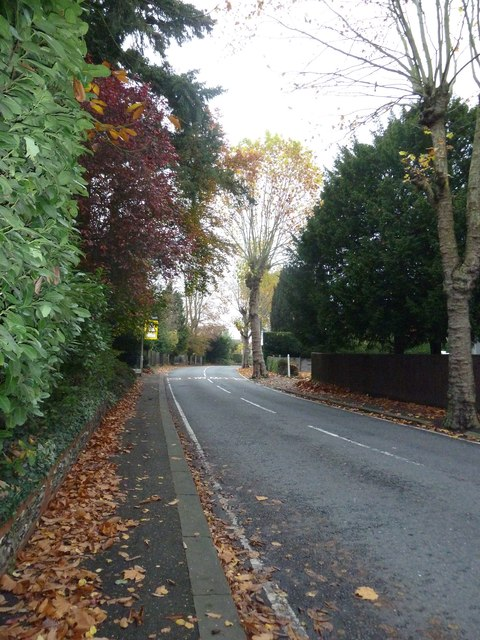 Autumn leaves in Kidmore Road
