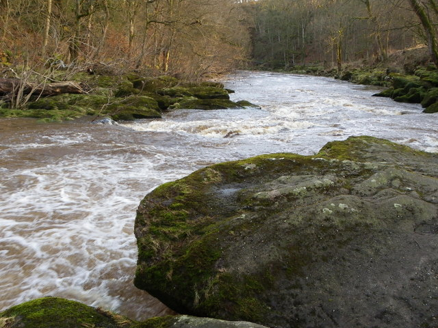 River Wharfe - exit 'The Strid'