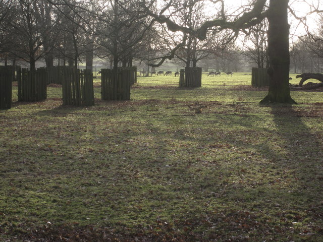 Distant deer Dunham Massey