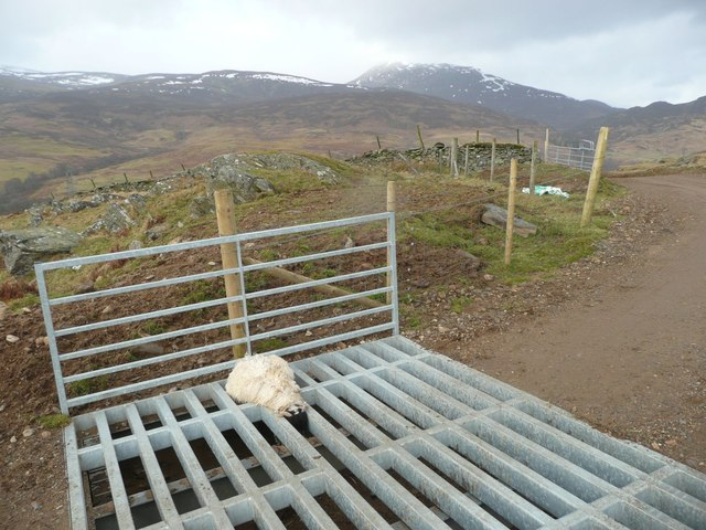 Sheep Killed By Cattle Grid 169 Russel Wills Cc By Sa 2 0
