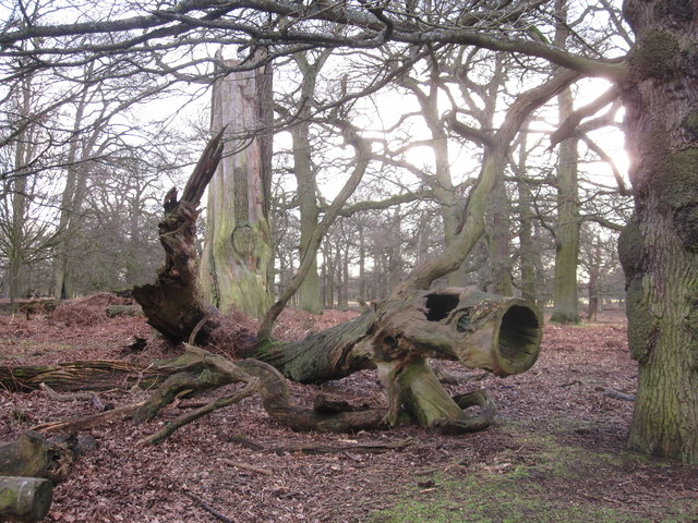 Natural sculpture Dunham Massey