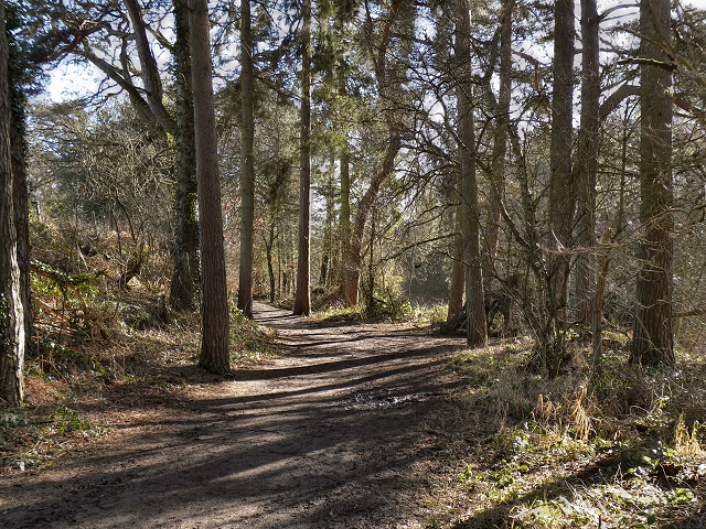 Styal Estate, Path to the Southern Woods