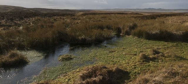 Boggy Ground near Am Màla, east of Killinallan, Islay