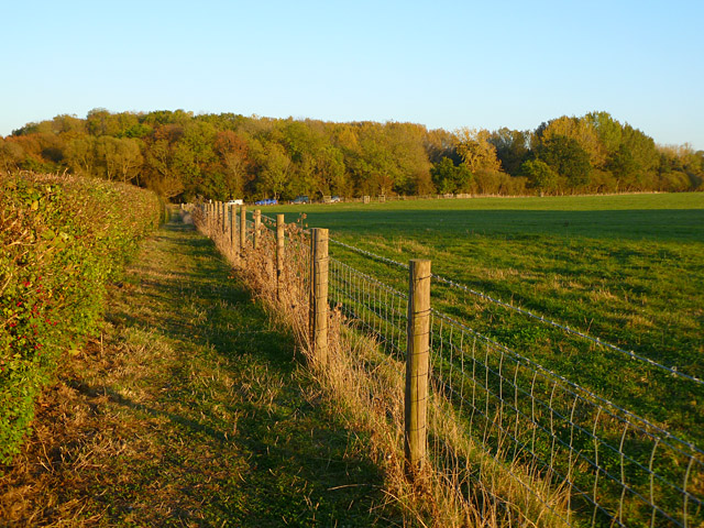 Pasture and woodland, Great Haseley