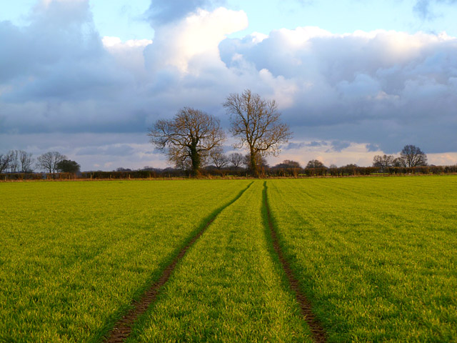 Farmland, Ashley Green