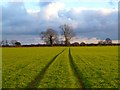 SP9903 : Farmland, Ashley Green by Andrew Smith