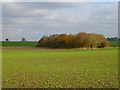 SU0875 : Farmland and copse, Winterbourne Bassett by Andrew Smith