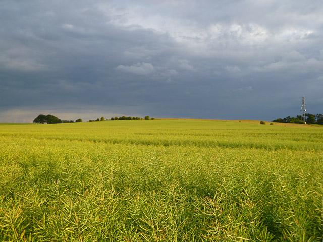 Farmland, Bishopstone