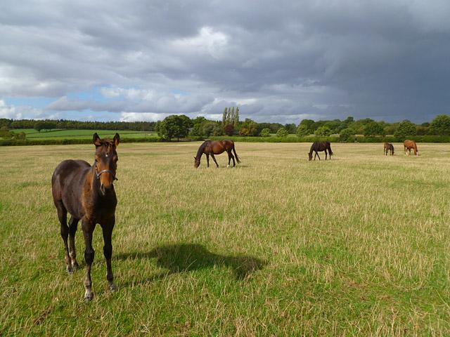 Pasture, Fernham