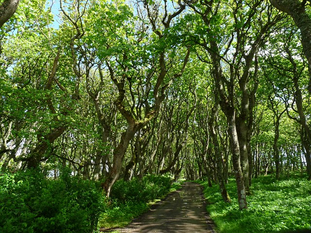 Woodland path in the grounds of The Castle of Mey