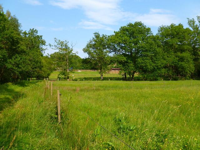 Pasture, Newtown