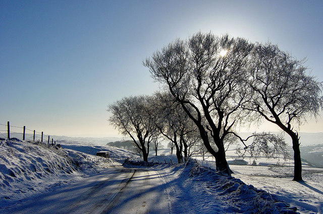Ice Trees, Barlow Hill