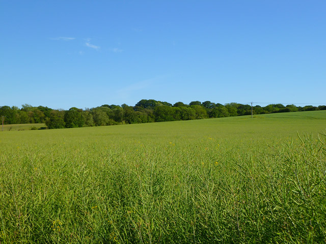 Farmland, Bucklebury