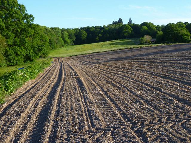 Farmland, Bucklebury