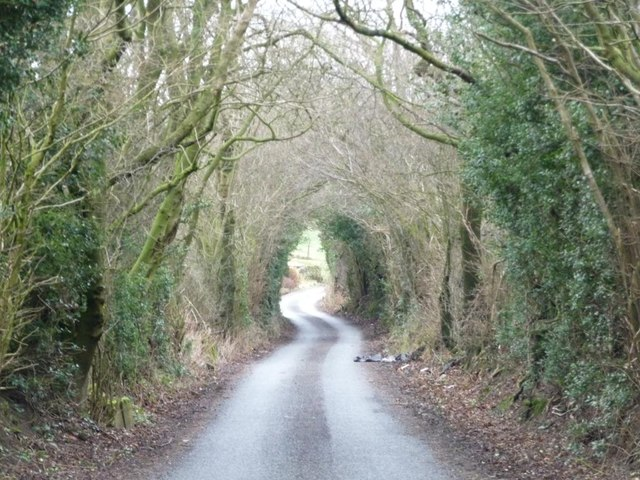 Green tunnel, Halstead Lane