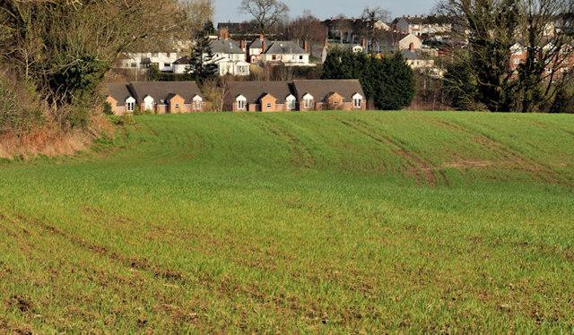 Suburban field, Belfast