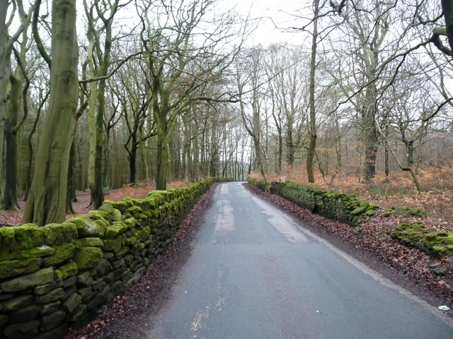 Wood Lane passing through the woods