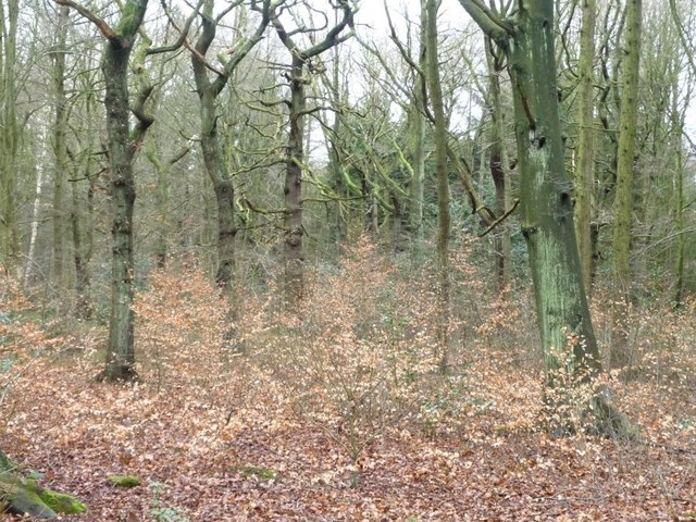 Boothroyd Wood in winter