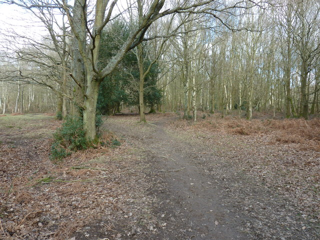 Footpath in Ashdown Forest near Lower Mishbourne Farm